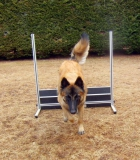 Obedience Training-Training di Obedienza...