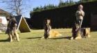 ...auf unserem Hundeplatz-nel nostro campo...
