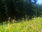 ...Tretsee/Lago di Tret!