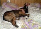 ...faulenzen-dormire...