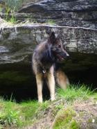 ...der Wolf in seiner Höhle!-Il lupo nella sua grotta!